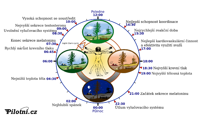 Biologický rytmus člověka
